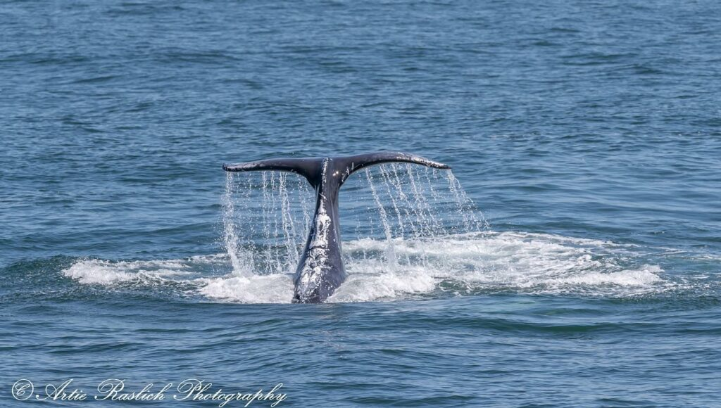 GOTHAM WHALE'S PETITION TO STOP THE OMEGA SLAUGHTER OF MENHADEN