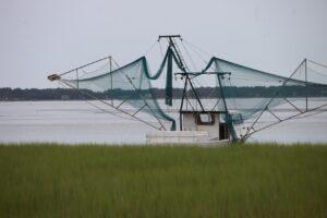 loggerhead turtle net